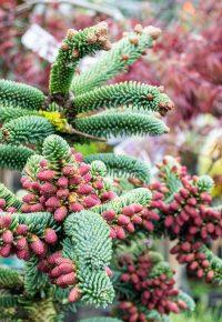 květiny do zahradních nádob a truhlíků, Zahrada Petr Šmach, Bzenec